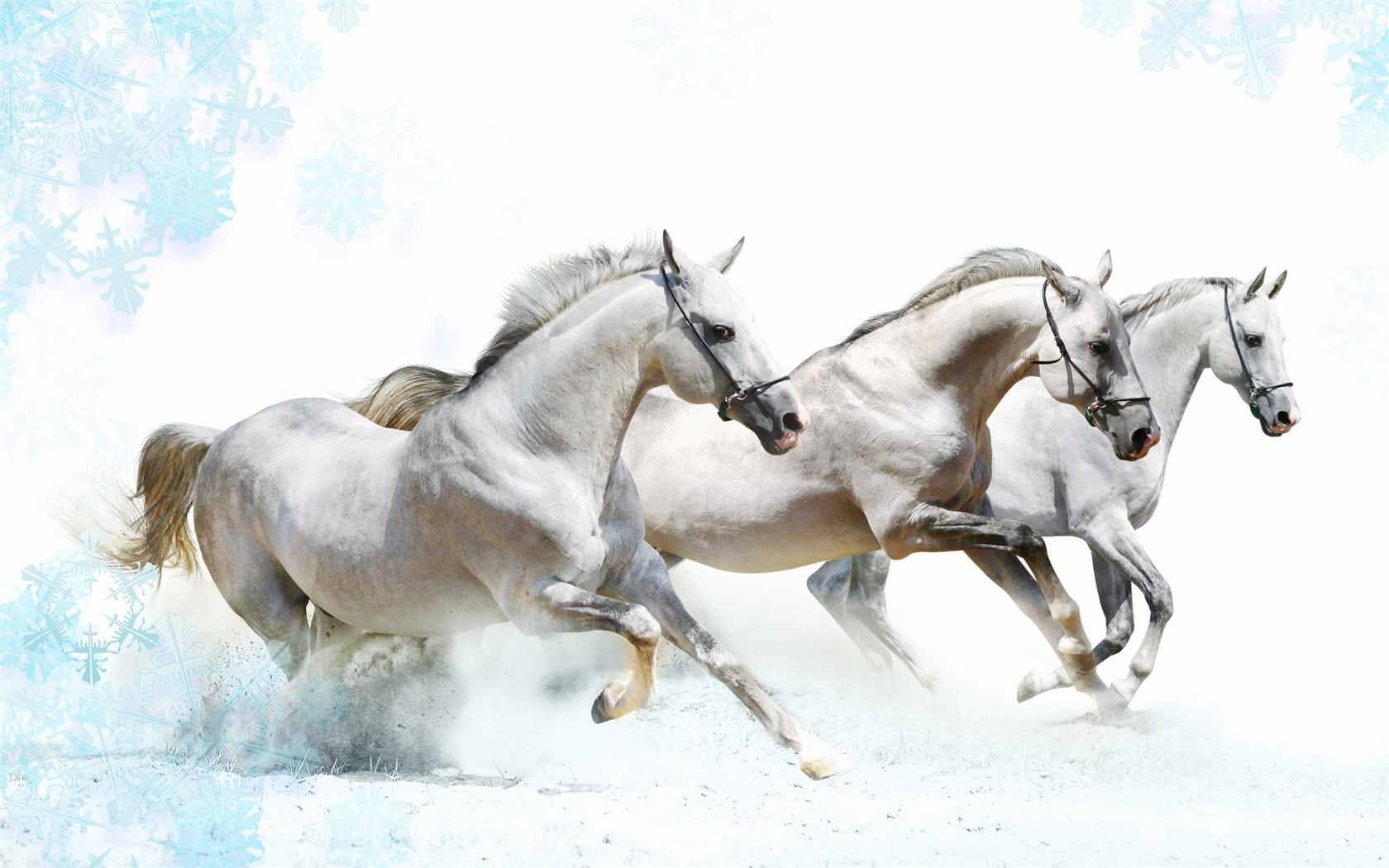 Super Pferd Fototapete (1) #9 - 1680x1050 Wallpaper ...