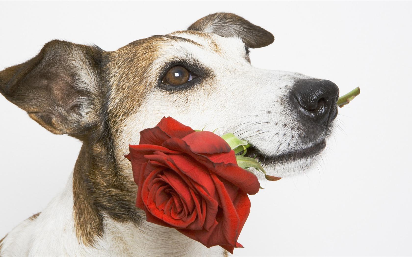 Открытки с днём рождения женщине животные