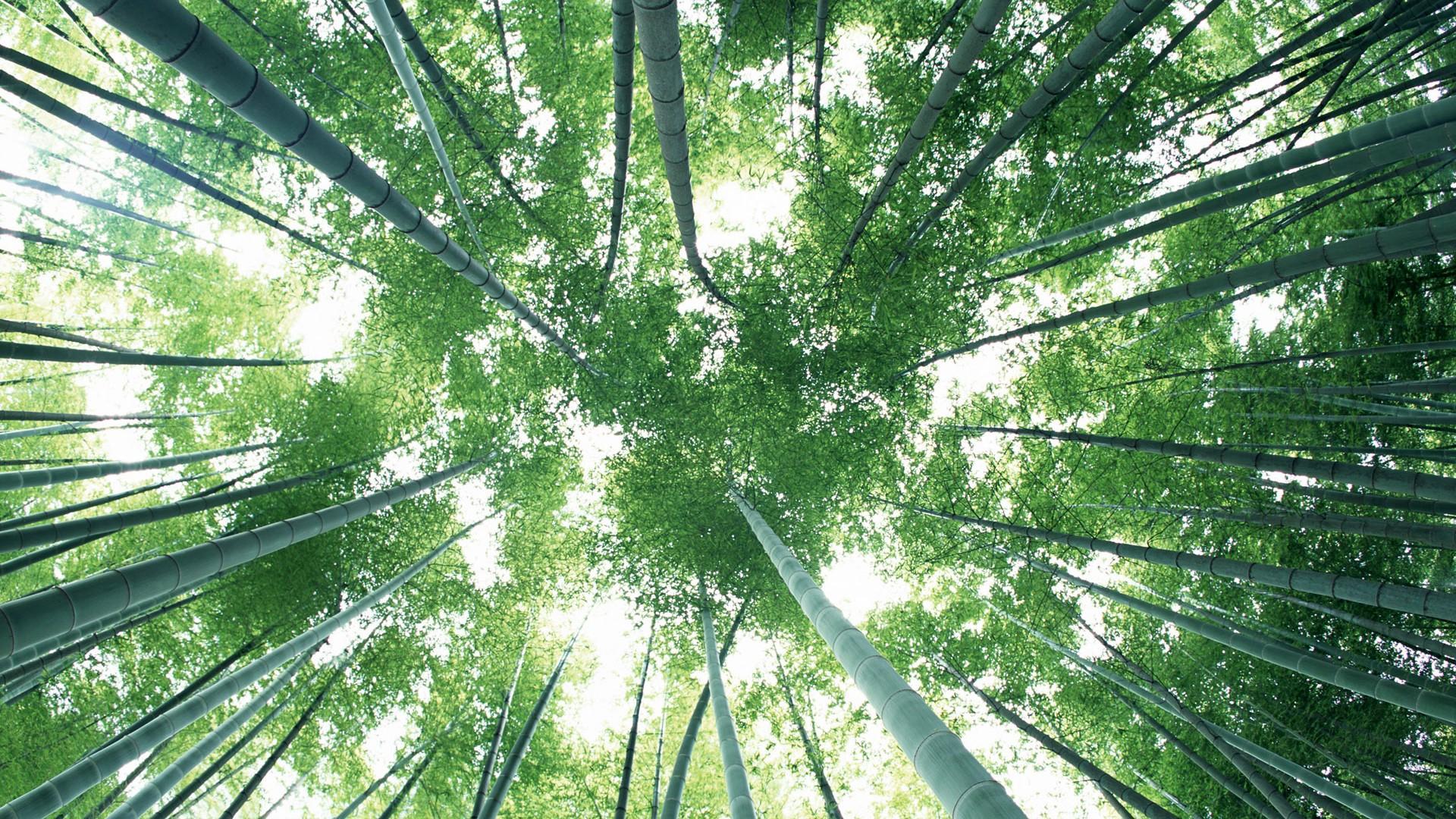 Fond D Ecran De Bambou Vert 8 1920x1080 Fond D Ecran Telecharger Fond D Ecran De Bambou Vert Plantes Fond D Ecran V3 Fond D Ecran Du Site