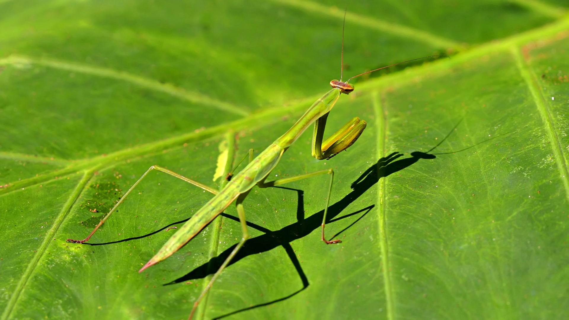 Características de insectos (2) #9 - 1920x1080