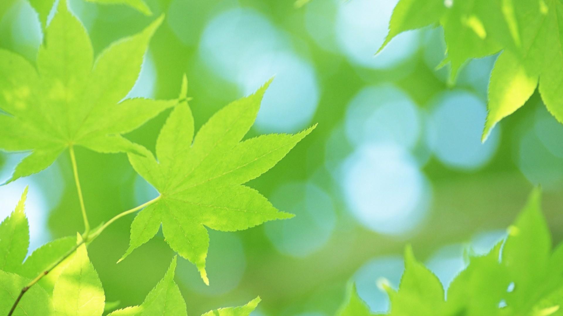 Fondos De Hojas De Papel: Frescas Hojas De Papel Tapiz Verde (2) #7