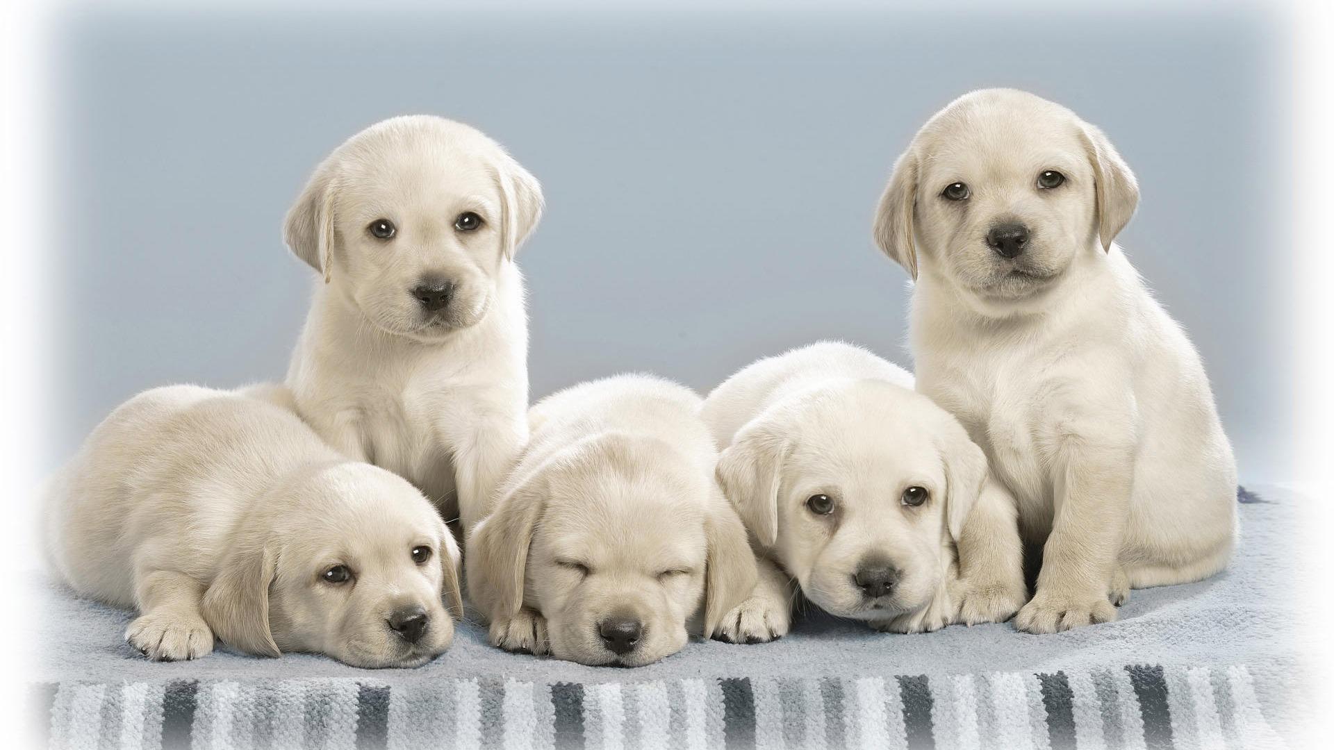 Cute Puppy Photo Wallpaper 18 1920x1080 Wallpaper Download Cute