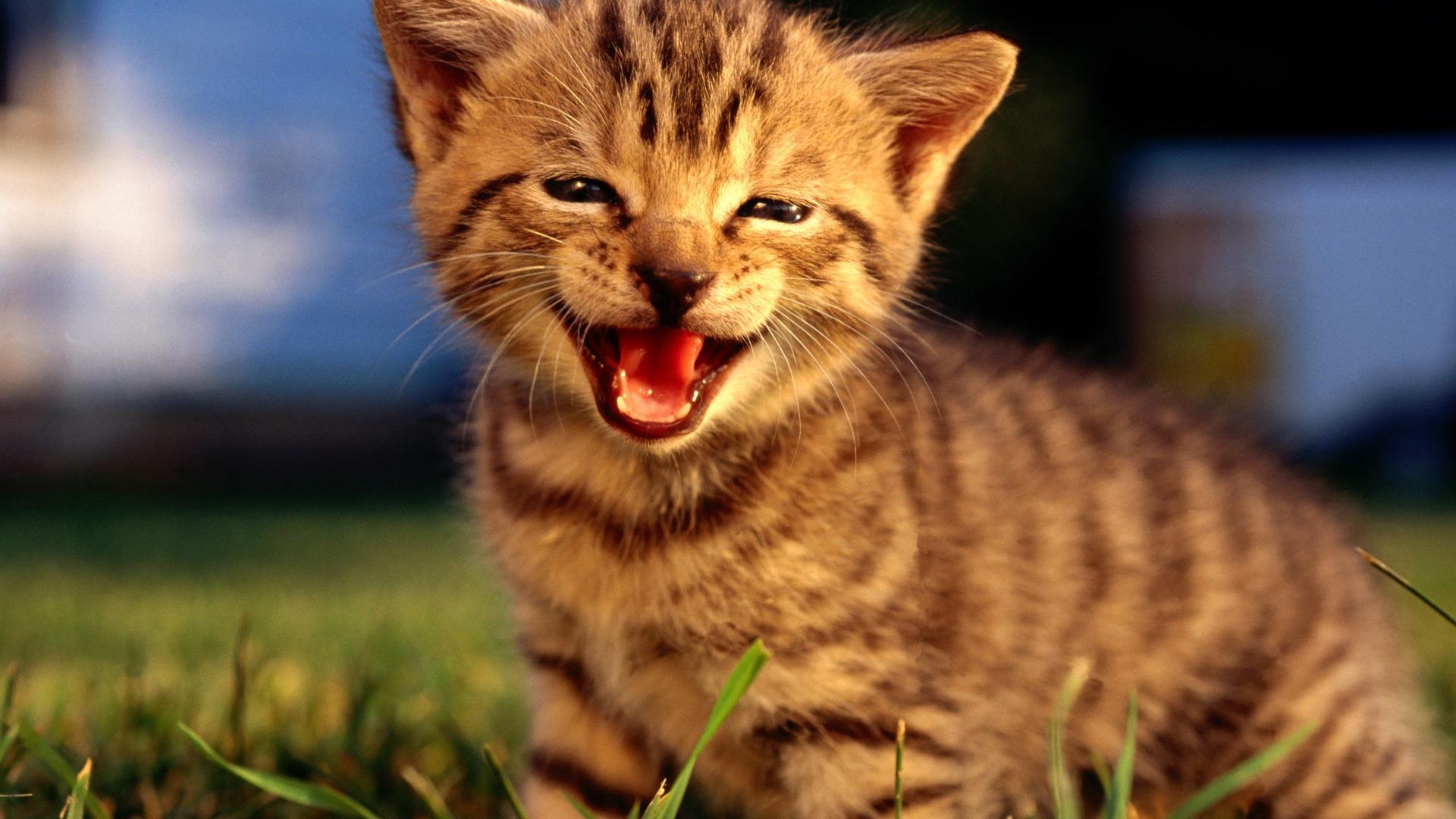 HD wallpaper cute cat photo #3 - 1920x1080 Wallpaper ... Hd Wallpaper 1920 X 1080 Kittens