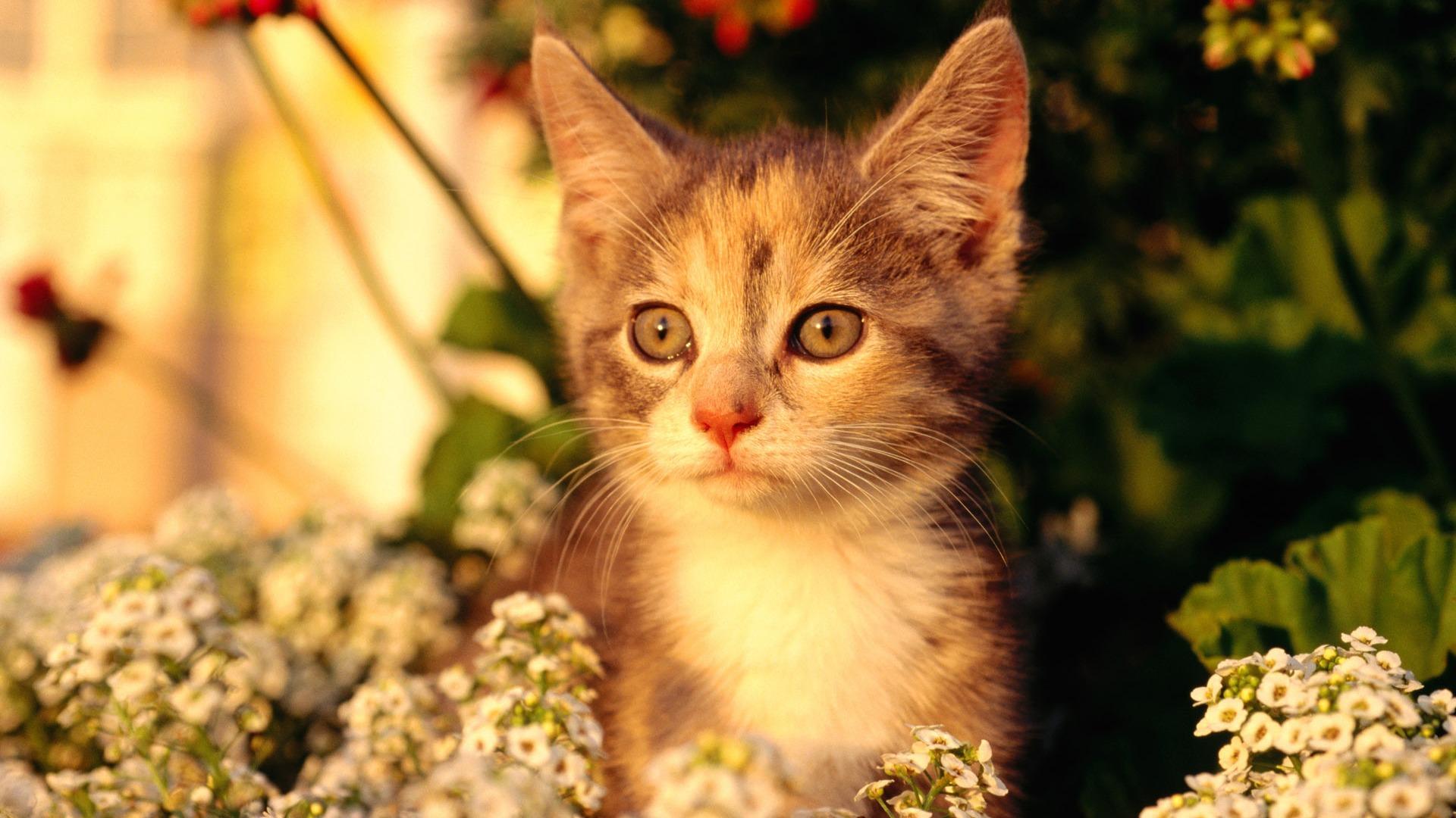 HD Wallpaper cute cat Foto #21 - 1920x1080 Wallpaper ... Hd Wallpaper 1920 X 1080 Kittens