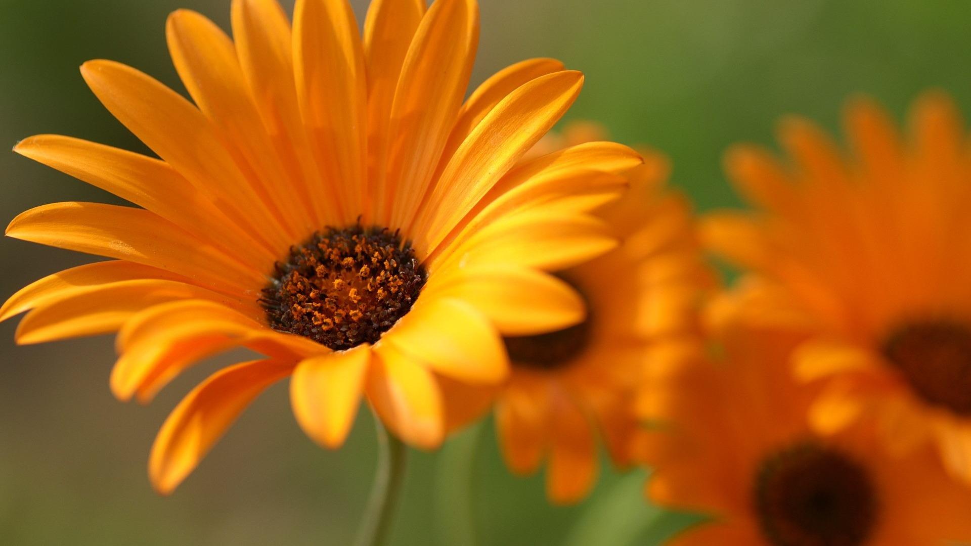 цветы фото hd: