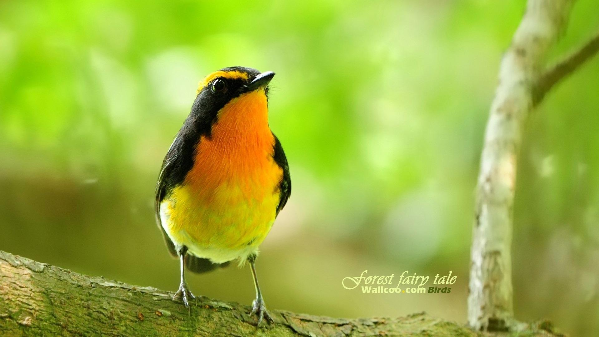 Beau papier peint des oiseaux au printemps 13 1920x1080 fond d 39 cran t l charger beau - Taille du pecher au printemps ...
