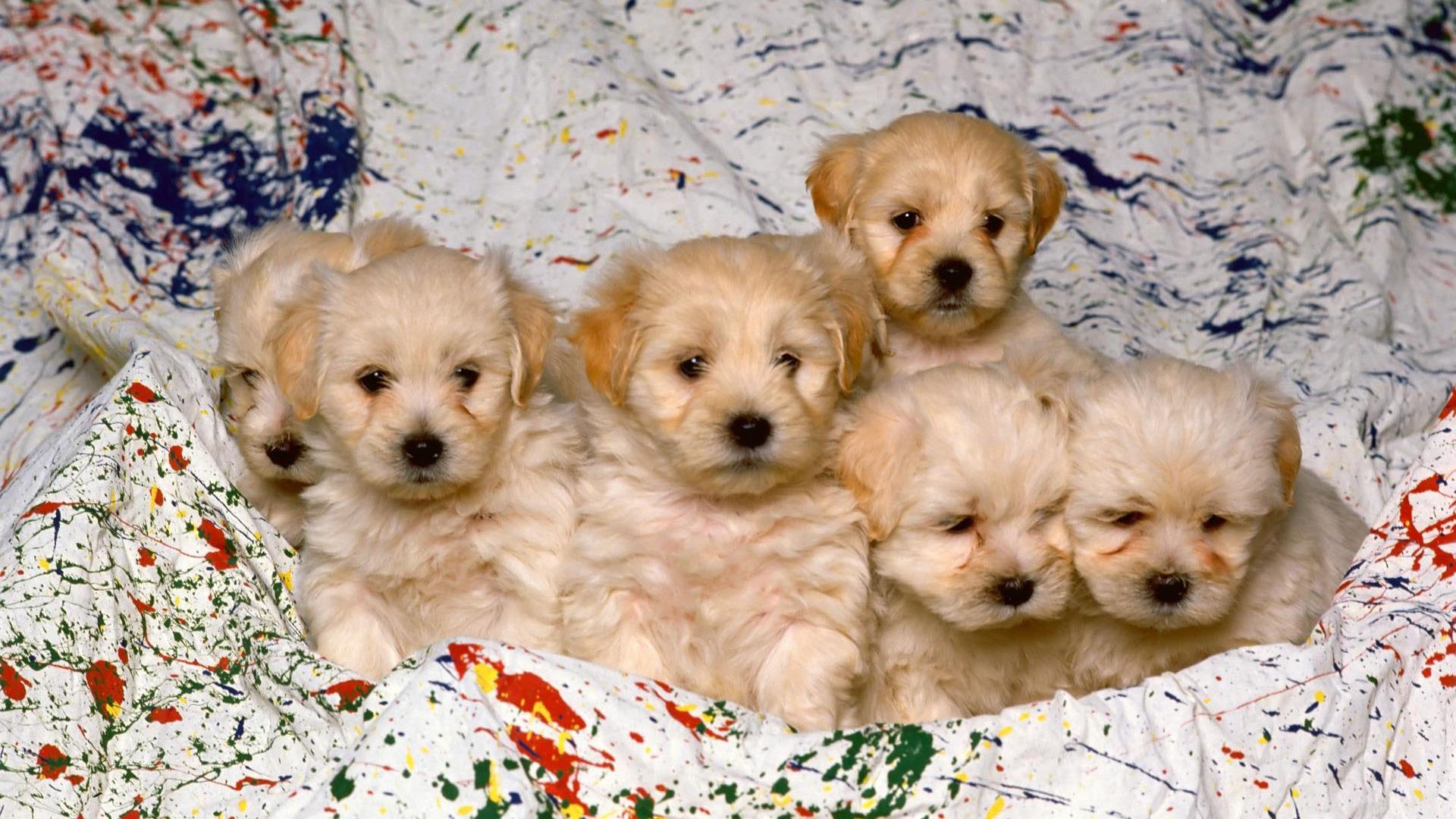 癒やし効果抜群!子犬の可愛い高画質画像まとめ!