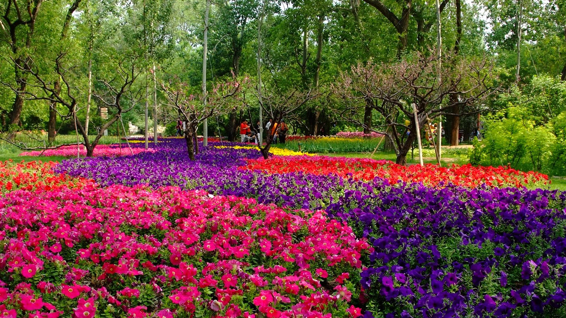 Xiangshan early summer garden rebar works 9 1920x1080 for Garden design 1920 s