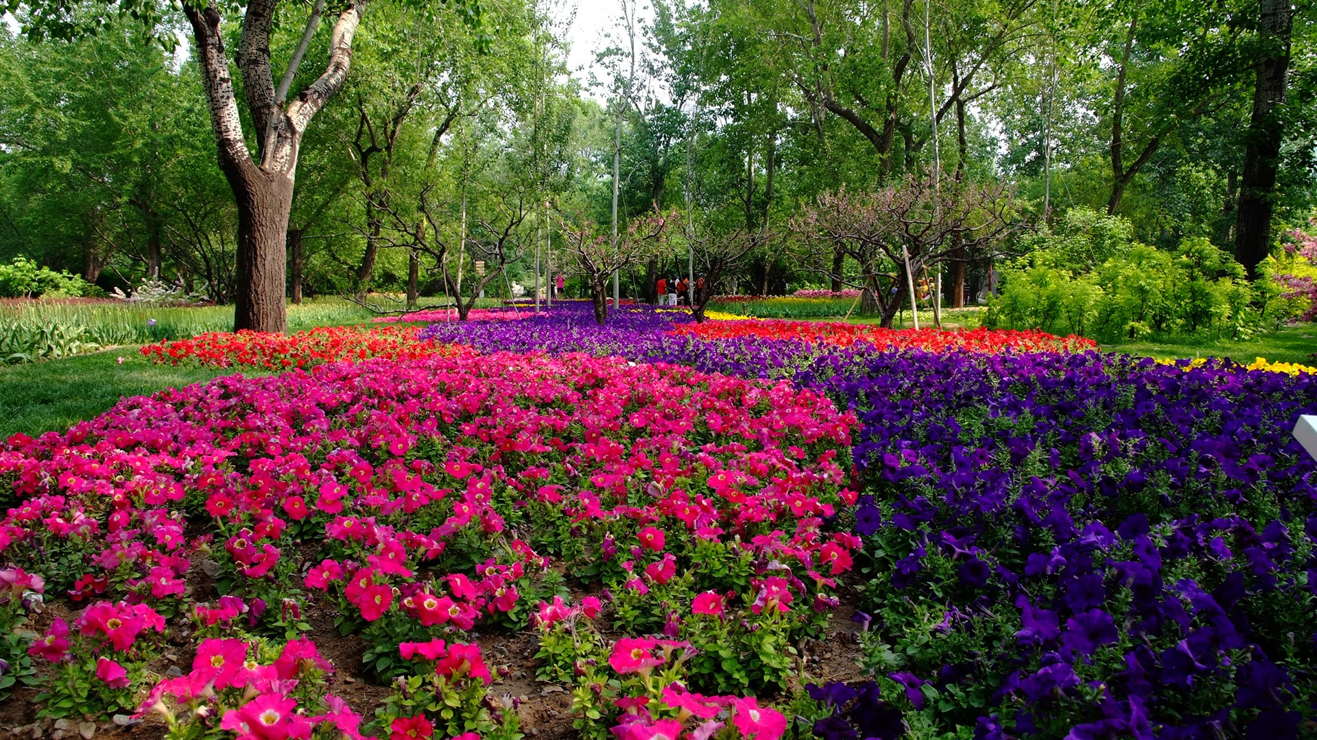Xiangshan Early Summer Garden (rebar Works) #10   1920x1080.