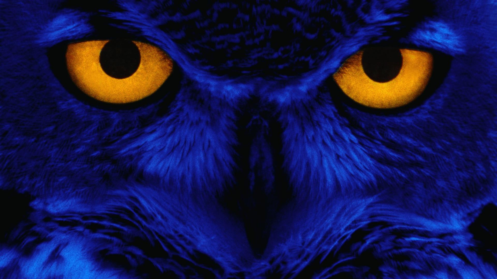 Download Wallpaper Halloween Windows 7 - 1920_1080_20101108092208537280  Graphic_32239.jpg
