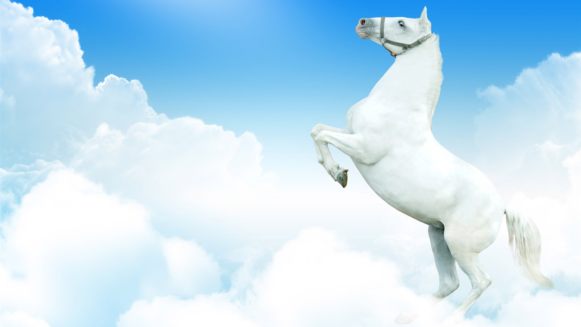Super Horse Photo Wallpaper 2 7 1920x1080 Wallpaper Download