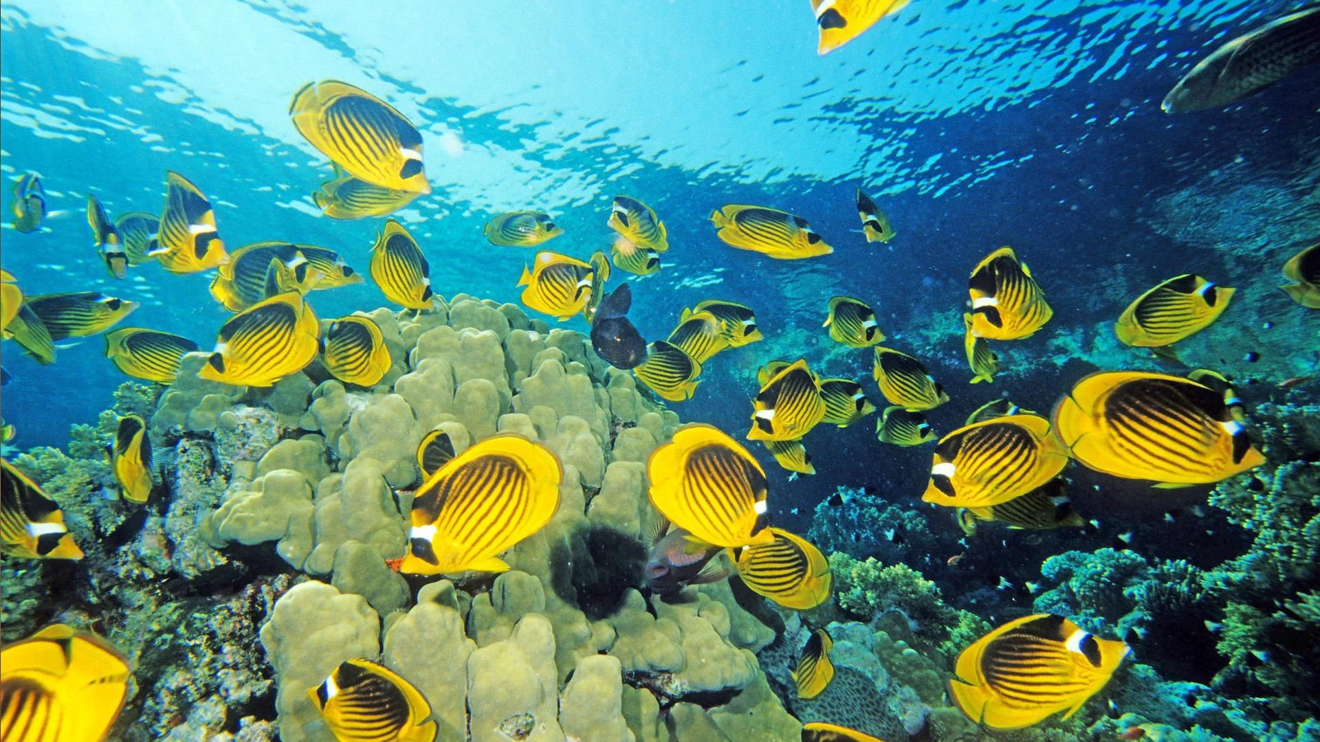 Fun Underwater World 7 19 1920x1080 Wallpaper Download