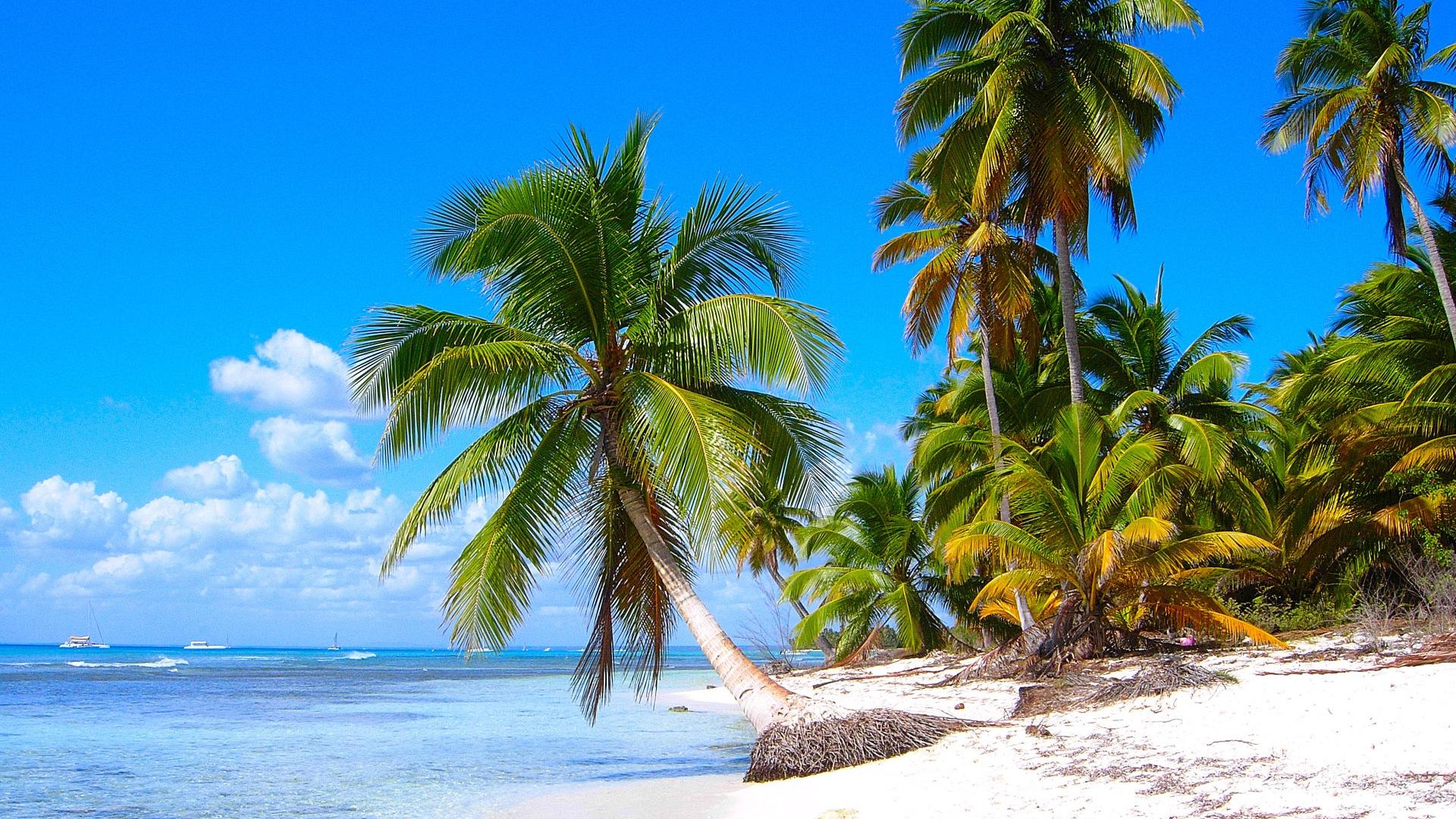 Windows 8 wallpapers caribbean shores 2 1920x1080 - Caribbean wallpaper free ...