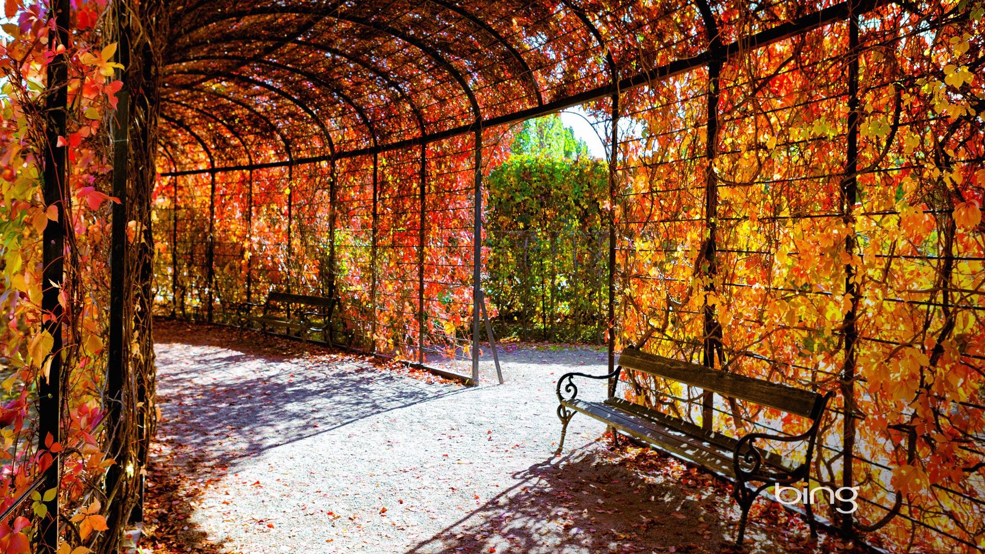 2013 bing paysages automne animaux fonds d 39 cran hd for Fondo de pantalla 1080 x 1920