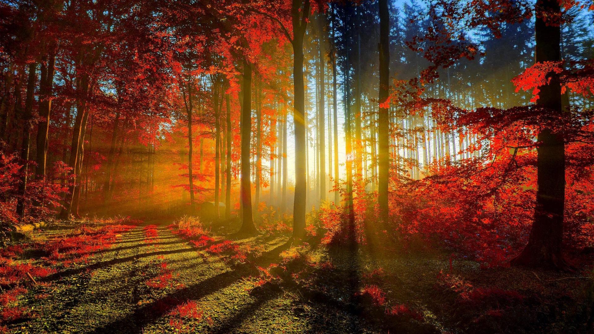 Herbst-Landschaft Wallpaper  Bilders