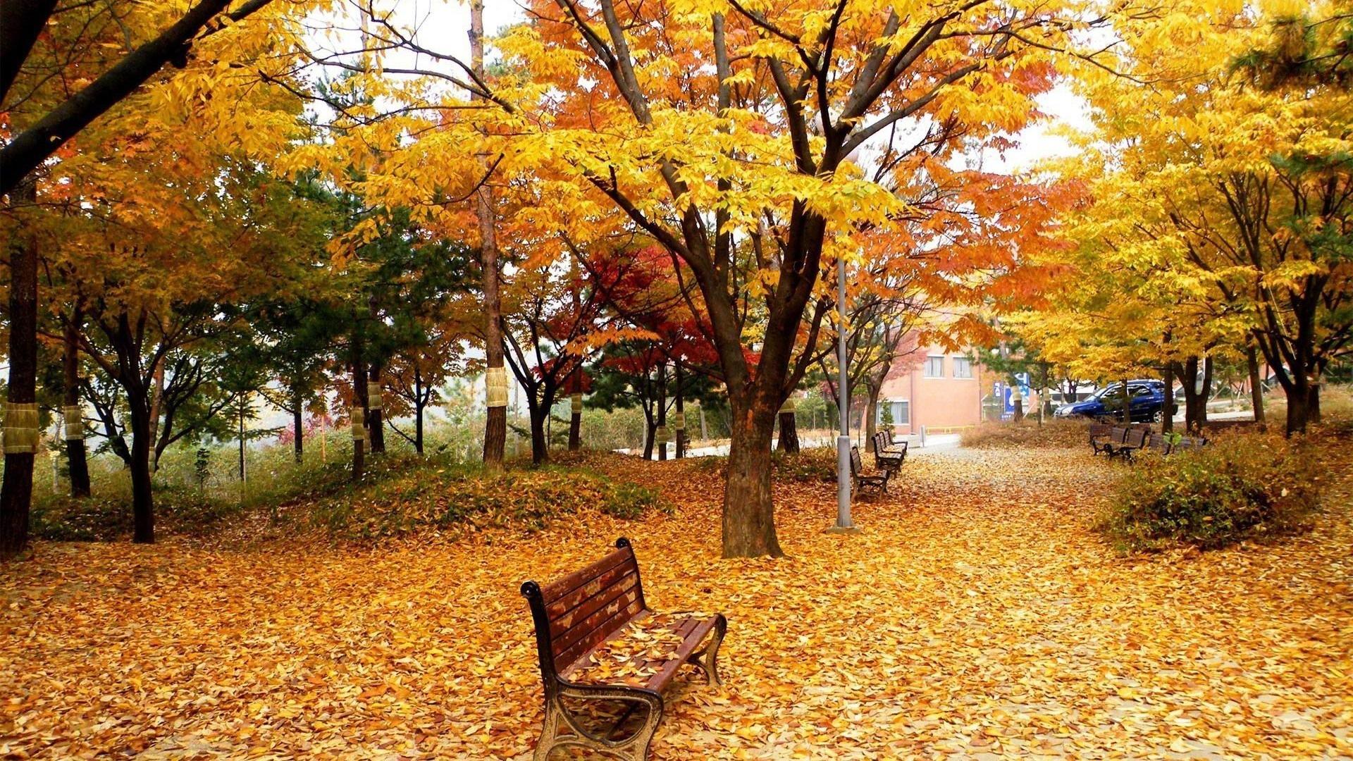 ウィンドウズ8 1テーマのhd壁紙 美しい秋の紅葉 3 19x1080 壁紙ダウンロード ウィンドウズ8 1テーマのhd壁紙 美しい秋の紅葉 システム 壁紙 V3の壁紙