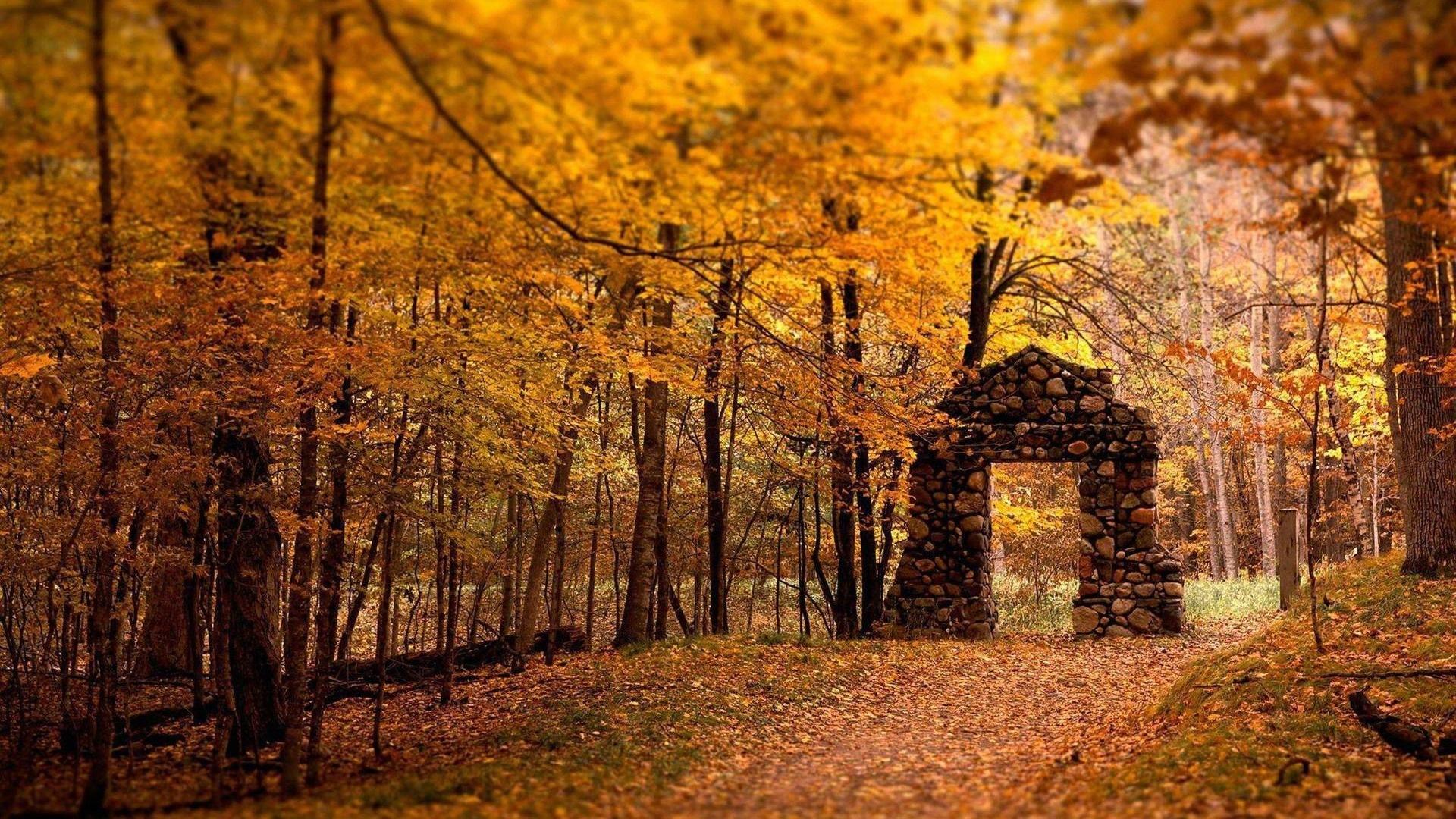 ウィンドウズ8 1テーマのhd壁紙 美しい秋の紅葉 4 19x1080 壁紙ダウンロード ウィンドウズ8 1テーマのhd壁紙 美しい秋の紅葉 システム 壁紙 V3の壁紙