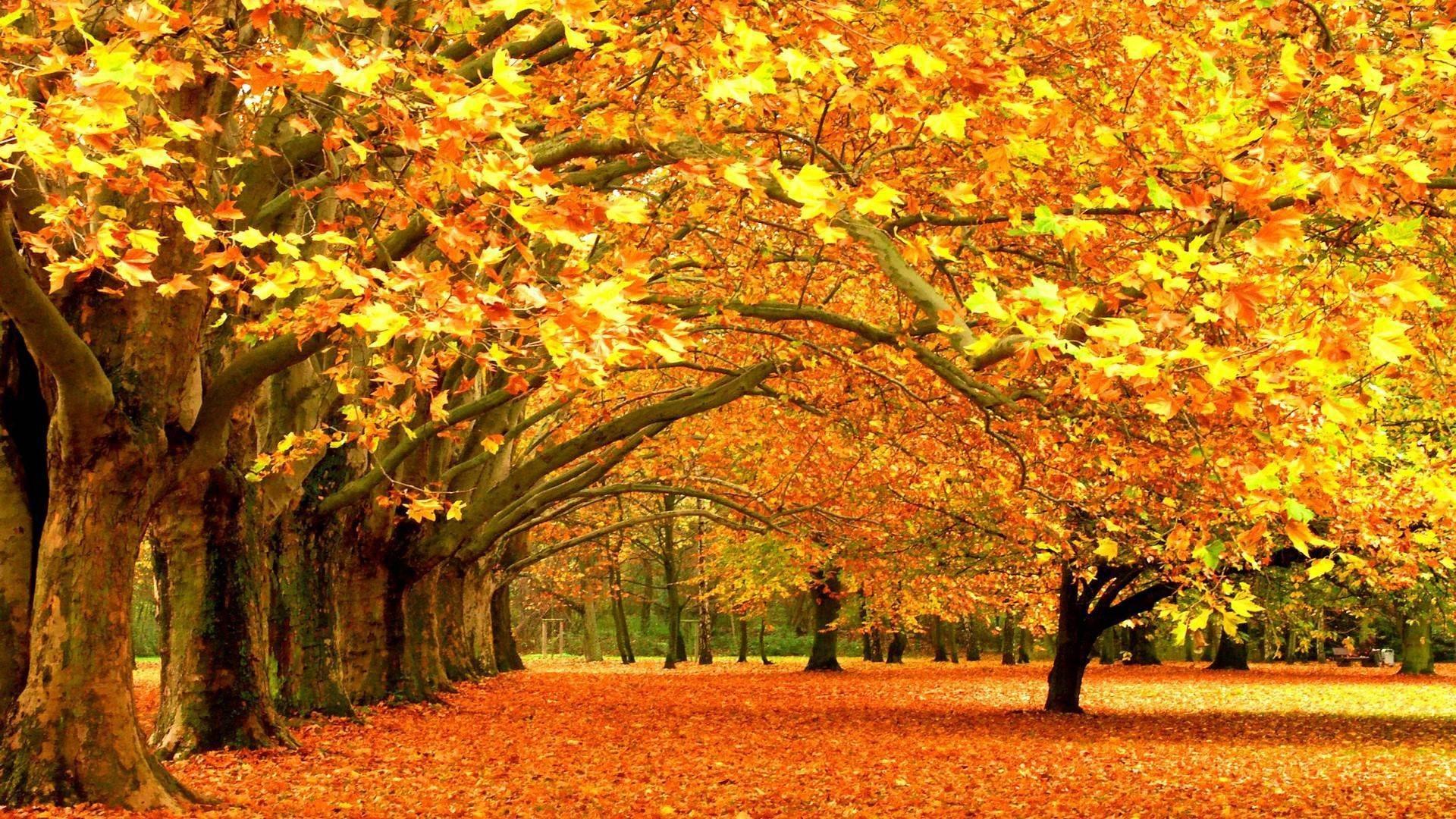 ウィンドウズ8 1テーマのhd壁紙 美しい秋の紅葉 6 19x1080 壁紙ダウンロード ウィンドウズ8 1テーマのhd壁紙 美しい秋の紅葉 システム 壁紙 V3の壁紙