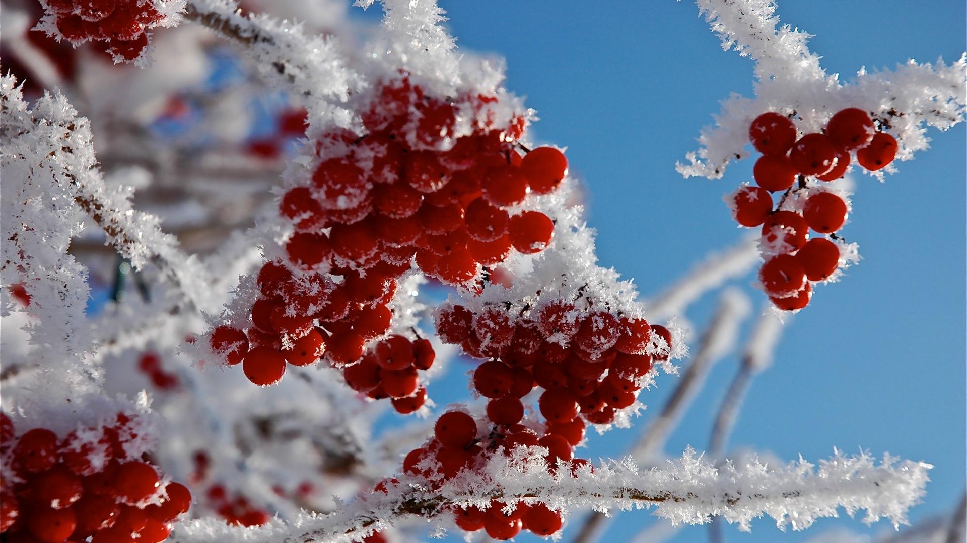 Baies d 39 hiver fonds d 39 cran hd gel de neige 14 for Fond ecran hiver hd