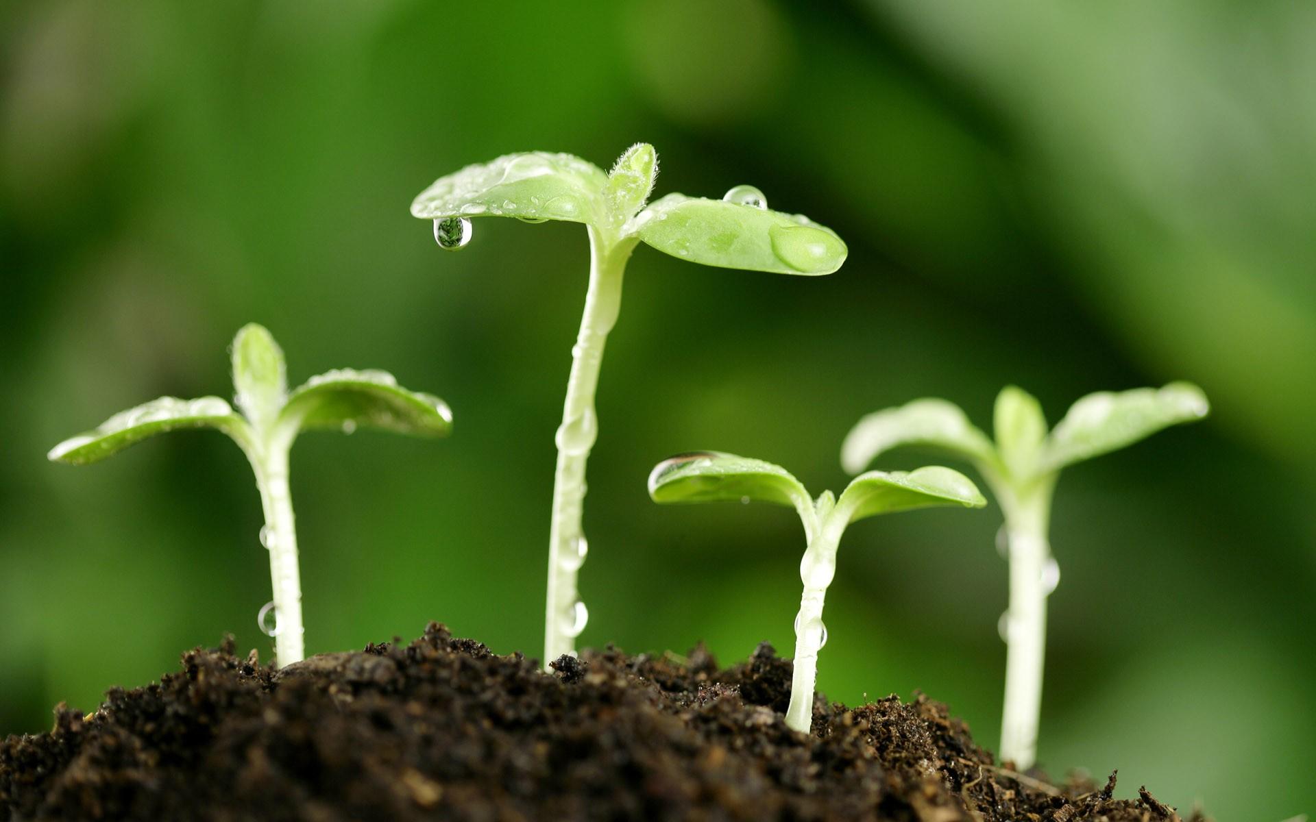 Hd 5 1920x1200 hd for Green pflanzen
