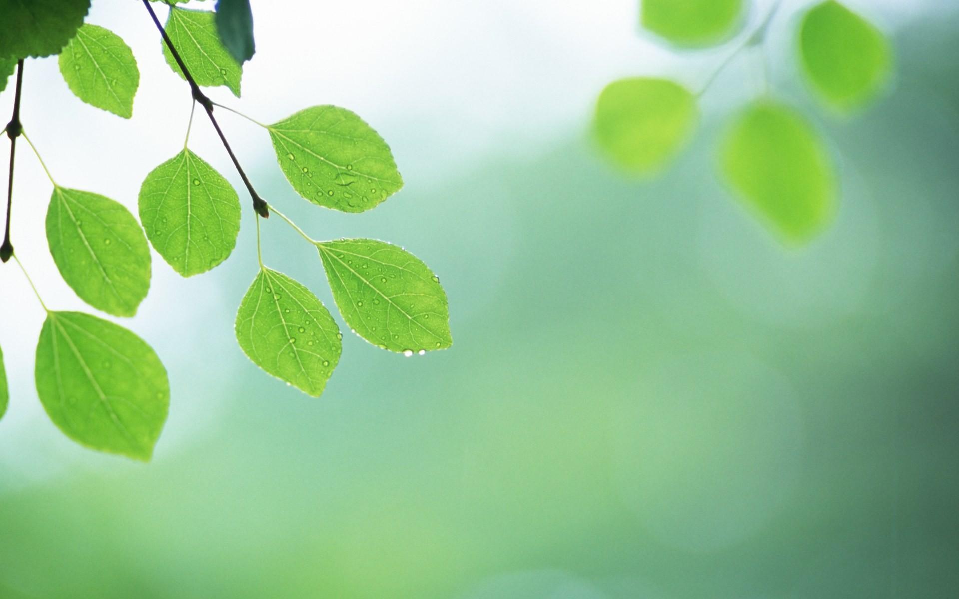 Fondos De Hojas De Papel: Frescas Hojas De Papel Tapiz Verde (2) #3