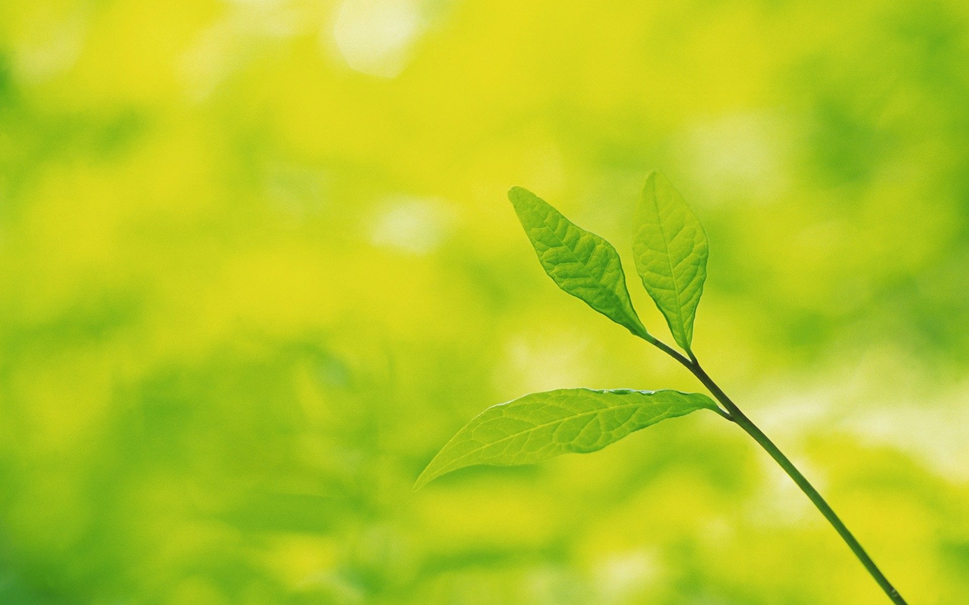Fondos De Hojas De Papel: Frescas Hojas De Papel Tapiz Verde (2) #16