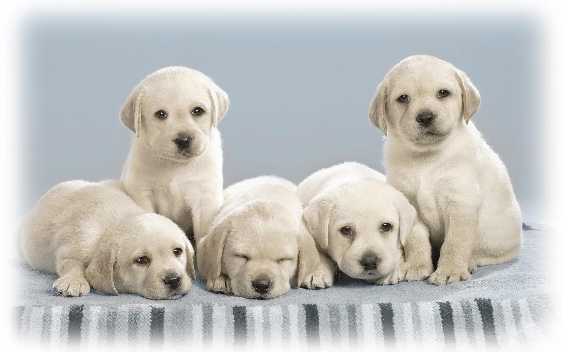 귀여운 강아지 사진 바탕 화면 #18