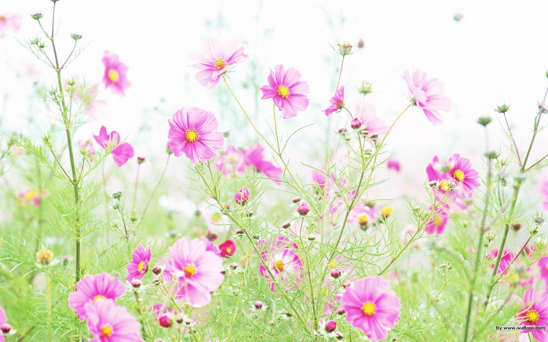 Blumen Hintergrundbild Related ...