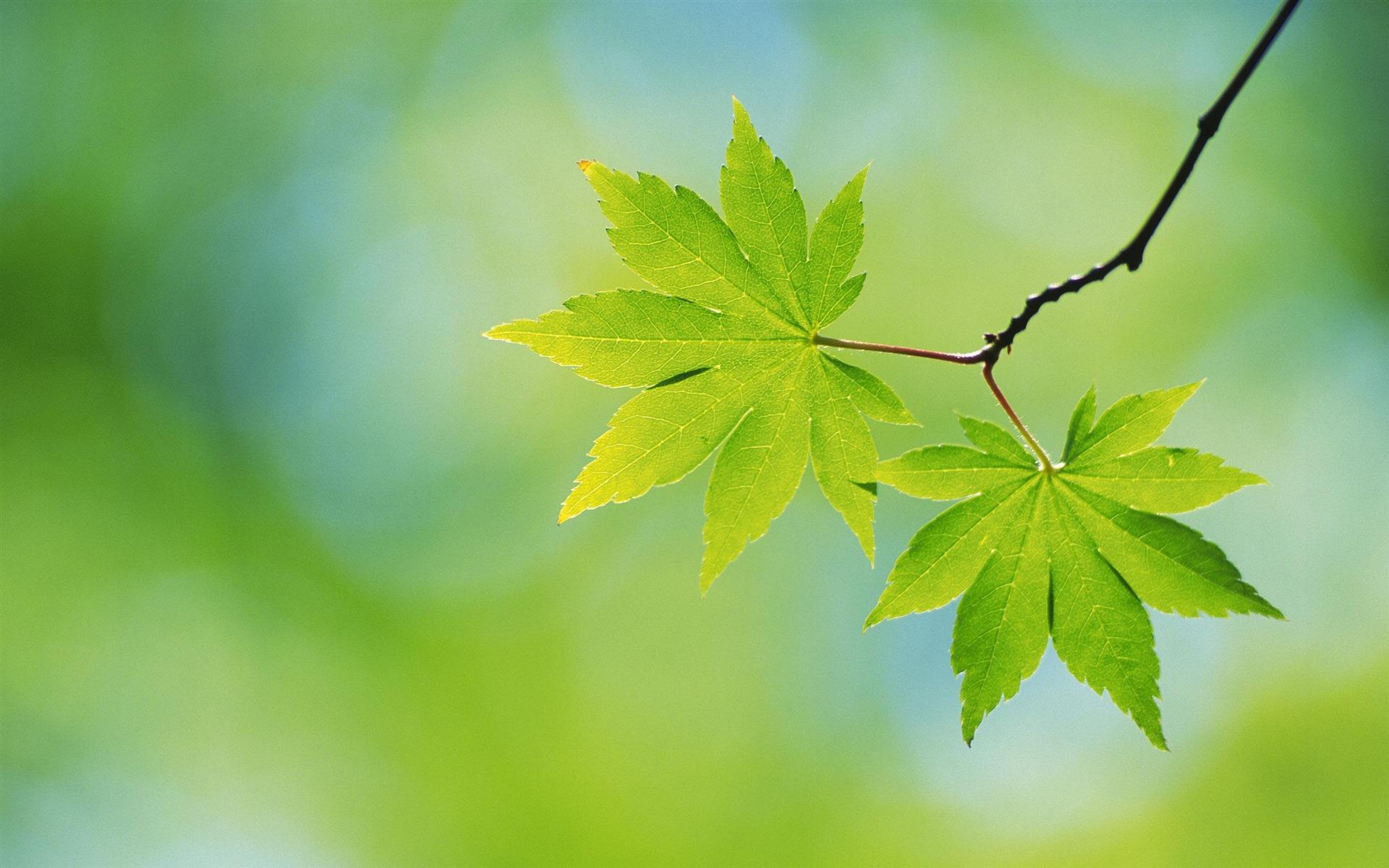 Grandes hojas verdes papel tapiz de flores de cerca 1 - Plantas de hojas verdes ...