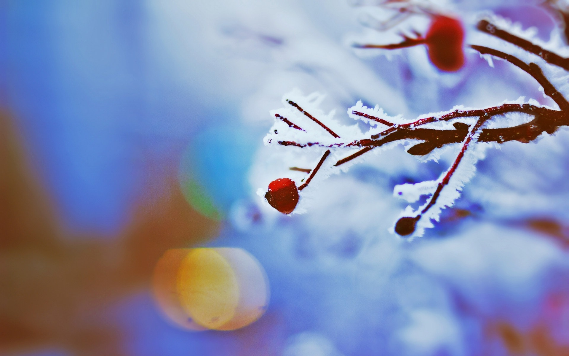 Winter berries, frost snow HD wallpapers #11 - 1920x1200.