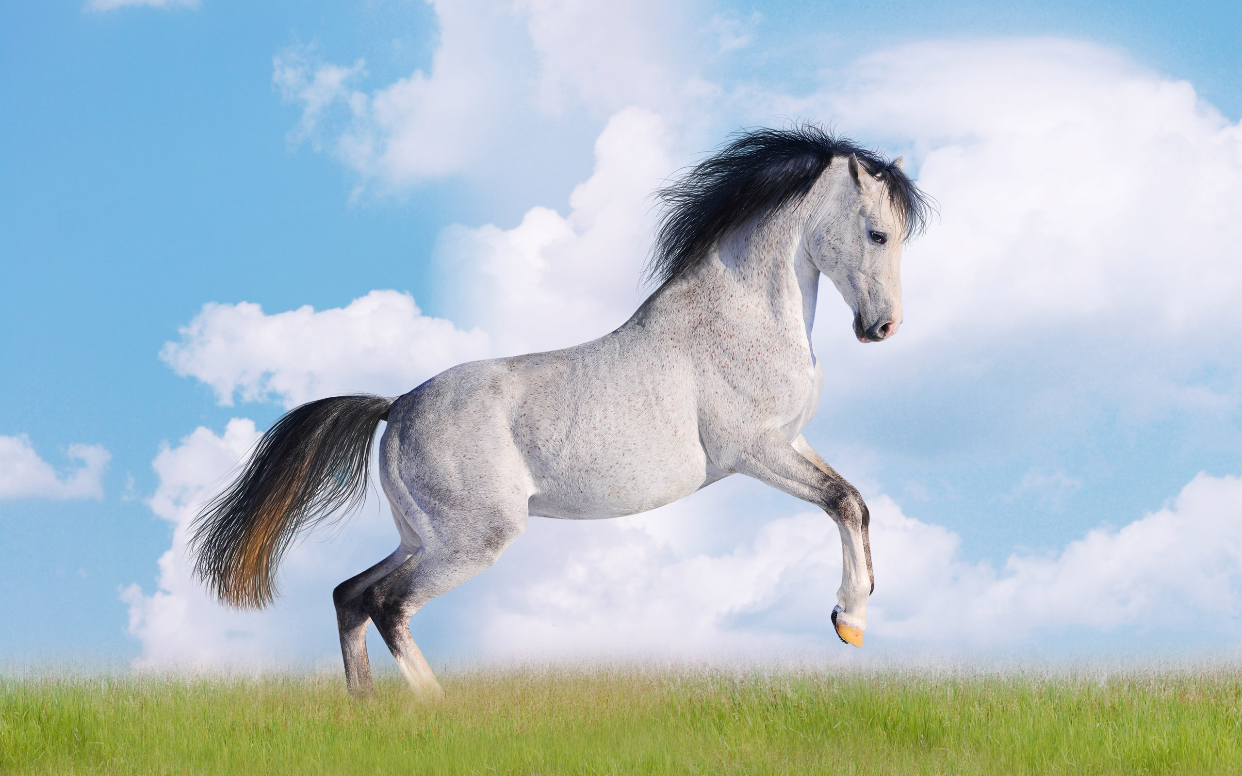 Super Horse Photo Wallpaper 2 20 2560x1600 Wallpaper Download