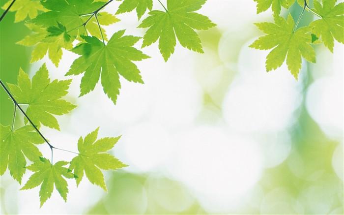 Fondos De Hojas De Papel: Frescas Hojas De Papel Tapiz Verde (2) #14