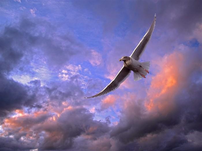 Смотреть фильм птицы небесные