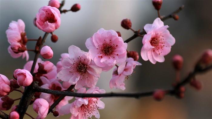 Imagenes fondo de pantalla primavera imagui for Fondo de pantalla primavera