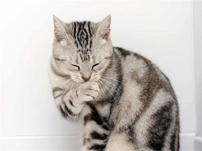 ::: 高清可爱小猫咪壁纸10 ::: 所属专辑:高清可爱小猫咪壁纸 所属分类:动物 更新时间:2009-12-16 图片描述:高清可爱小猫咪壁纸10 可下载尺寸:1024x768 | 1280x800 | 1280x1024 | 1366x768 | 1440x900 | 1680x1050 | 1600x1200