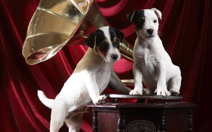蓄音機とかわいい子犬