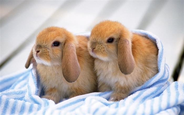 Populaire Fond d'écran mignon petit lapin #35 - Fond d'écran Aperçu - Animal  LF22