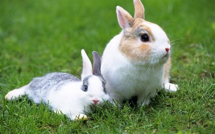 可爱的小兔子壁纸专辑38