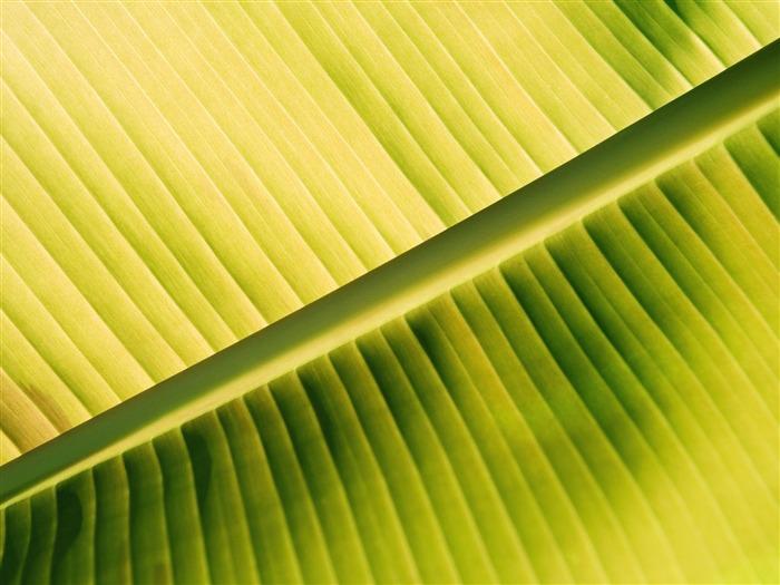 Plantas fondos de color verde hoja 2 fondo de pantalla - Color verde hoja ...