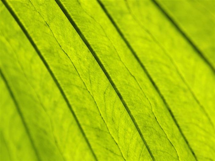 Plantas fondos de color verde hoja 12 fondo de pantalla - Color verde hoja ...