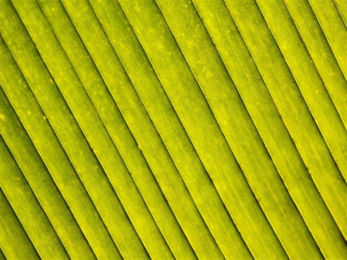 Plantas fondos de color verde hoja 17 fondo de pantalla - Color verde hoja ...