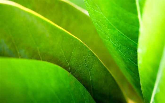 Widescreen HD wallpapers Plants #34