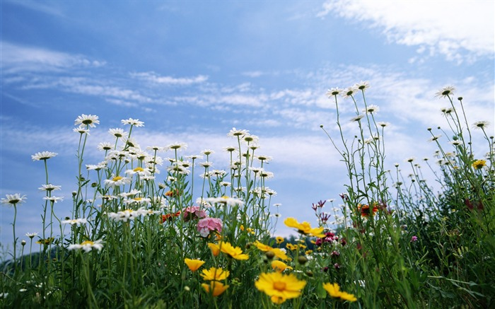 Полевые цветы: летний поход в июле по холмам Подмосковья к 230