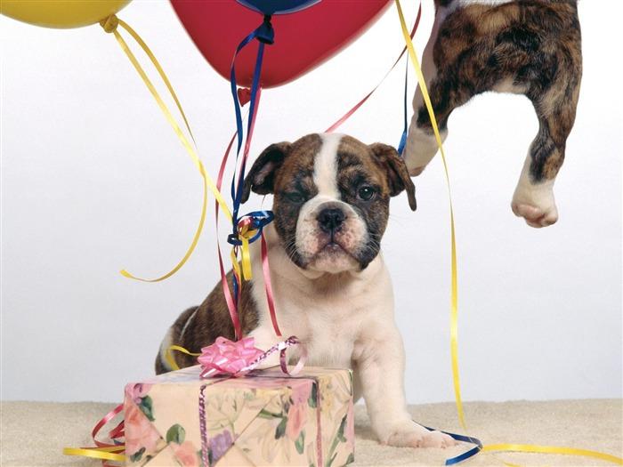 животных с днем рождения