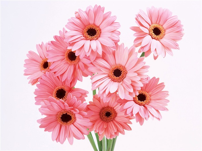 вязание крючком, цветы крючком