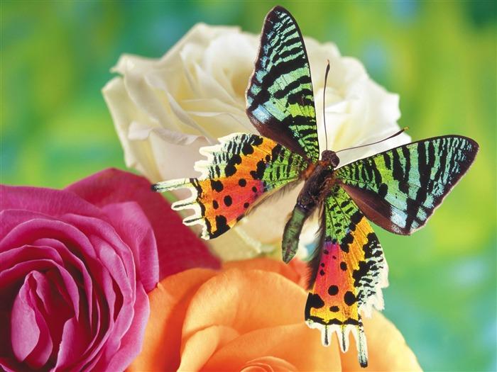 Las mariposas y las flores fondos de escritorio de disco (1) #1 ...
