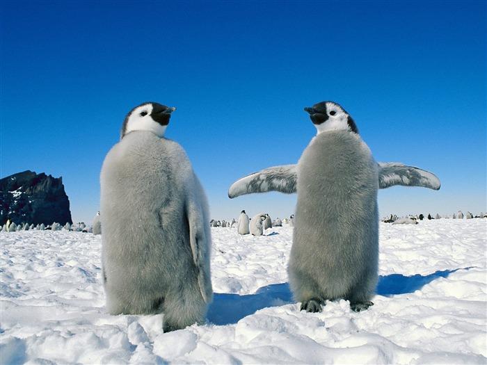 モフモフのペンギン