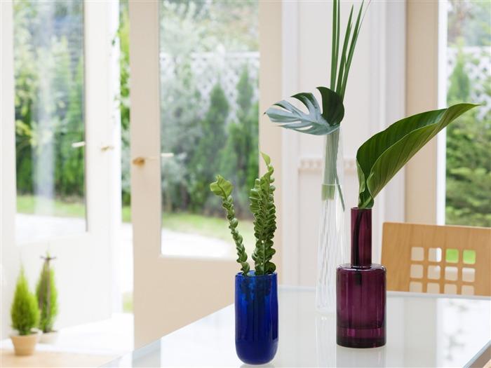 Интерьер цветы комнатные фото