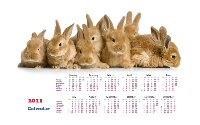 Year of the Rabbit 2011 calendar wallpaper (1) #20