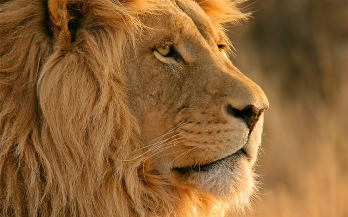 图片描述:mac os x lion 苹果系统狮子 官方高清壁纸13 可下载尺寸